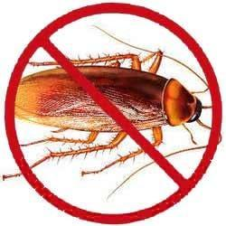 Pest Control Service in Chandigarh