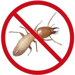 Termite Control Services in chandigarh