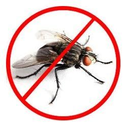 Flies Control Services in chandigarh