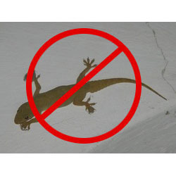 Lizard control Services in Chandigarh