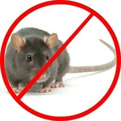 Rats Control Services in chandigarh